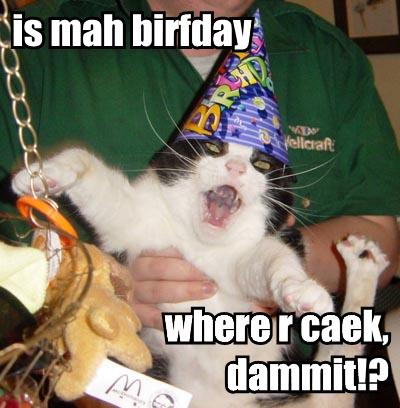 birthday cat inspiracion volatil blog